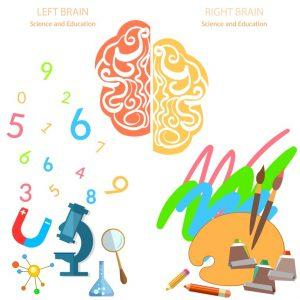 brain 179 300x300 Left and right side of the brain logic and creativity education back to school sciences and arts vector banners